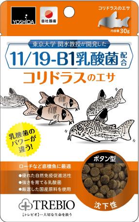 11/19-B1乳酸菌配合コリドラスのエサ